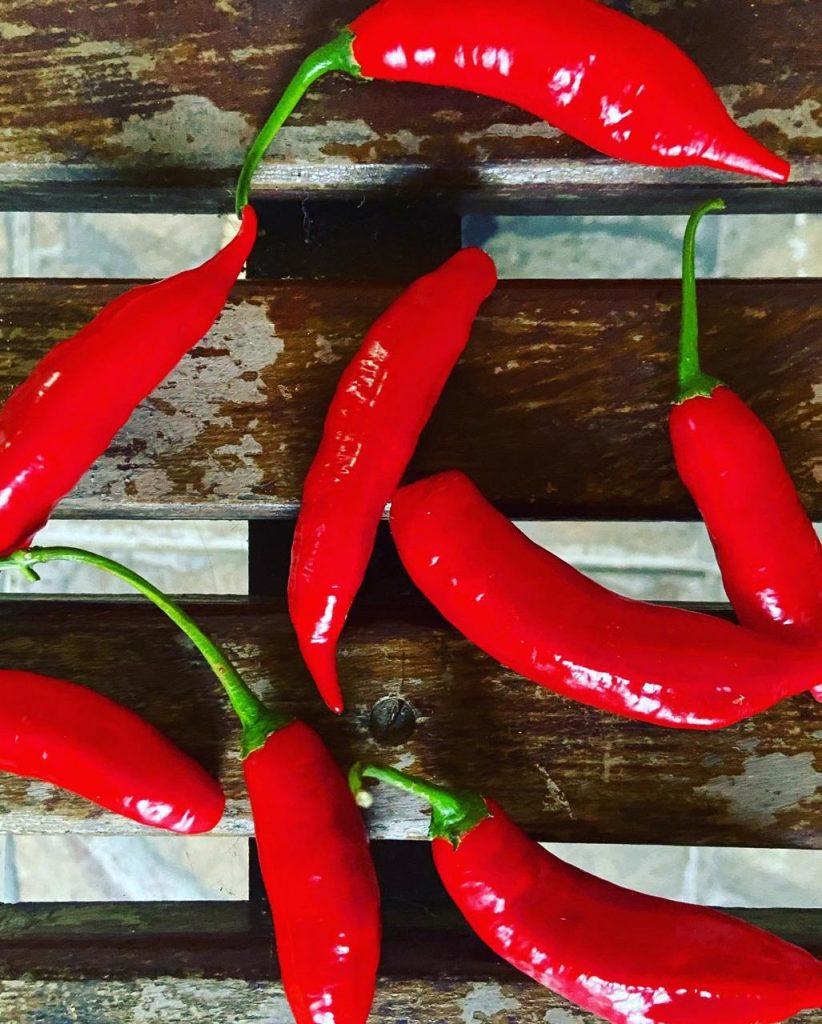 curiosidades a respeito da pimenta
