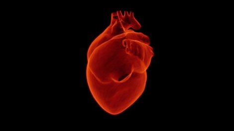 Mais de 300 mil brasileiros morrem por ano por causa da arritmia cardíaca